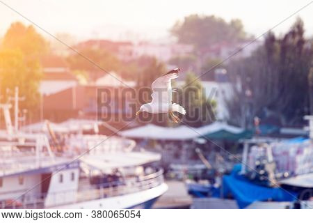 Summer travel background of flying seagulls in traditional greek port. Summer holidays on the coast of Greek islands concept.