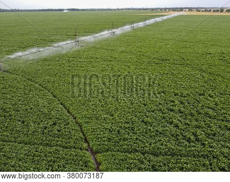 Large Round Field Of Soybeans With Automatic Watering, A System For Watering Crops.