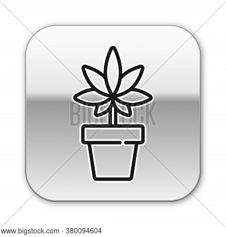 Black Line Medical Marijuana Or Cannabis Plant In Pot Icon Isolated On White Background. Marijuana G