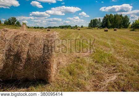 Hay, Mown Grass, Bales Of Hay In The Field. Countryside.