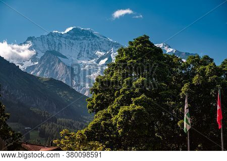 Landscape Image With Some Trees With Green Foliage And The Famous Snow Capped Jungfrau Mountain In T