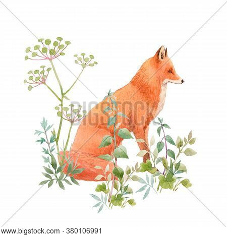 Beautiful Floral Composition With Watercolor Cute Fox And Field Flowers. Stock Illuistration.