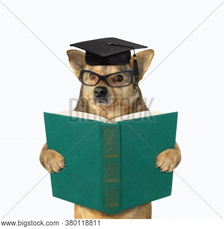 The Beige Dog In An Academic Cap And Glasses Is Standing With A Open Green Book. White Background. I