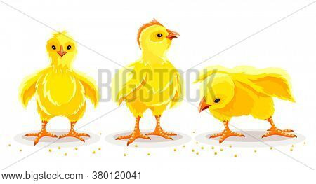 Hen chicken and rooster. Newborn little domestic poultry birds with yellow fluff and feathers pecking corn seeds. Set of farming animals from village farm. Livestock set. Isolated. 3D illustration.