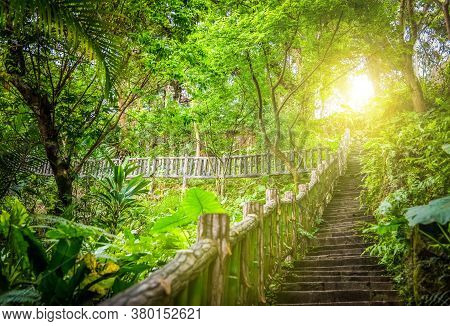 Image Of Stairs In The Forest Surrounded By Vegetation, Wooden Stairs Surrounded By Vegetation
