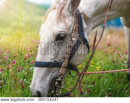Horse Eating In Soft Green Grass In The Field Under Tree, Grazing Brown Horse On The Green Field. Ho