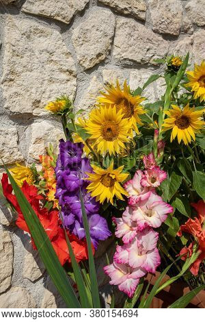 Blooming Sunflowers And Colorful Gladioli Against The Background Of A Limestone Wall
