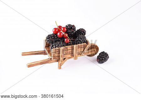 Blackberries And Red Currants In The Antique Barrow.