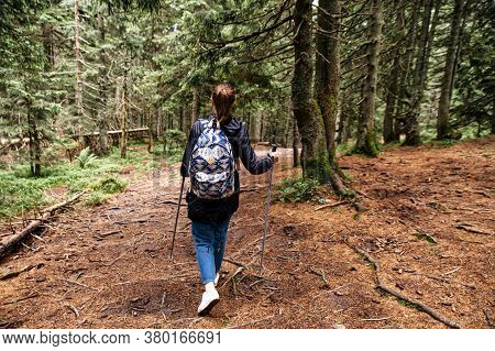 Back View Of Woman With Backpack Walks With A Poles For Nordic Walking In A Picturesque Pines Forest