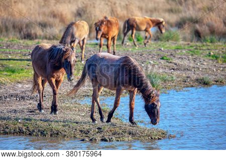 Scenery With Wild Horse .mustangs In The Wild