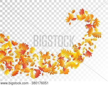 Oak, Maple, Wild Ash Rowan Leaves Vector, Autumn Foliage On Transparent Background. Red Gold Yellow