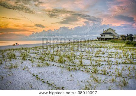 Beach sunset with dune reeds