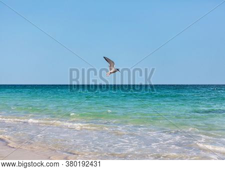 Sea gull on blue background