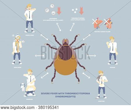 Severe Fever With Thrombocytopenia Syndrome (sfts) With Tick And Symptoms Concept, Flat Character De