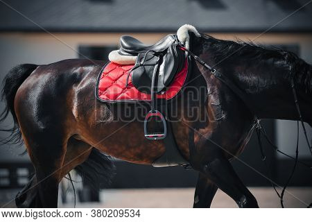 A Beautiful Bay Horse With A Long Tail Is Wearing Sports Equipment - A Black Leather Saddle, A Red S