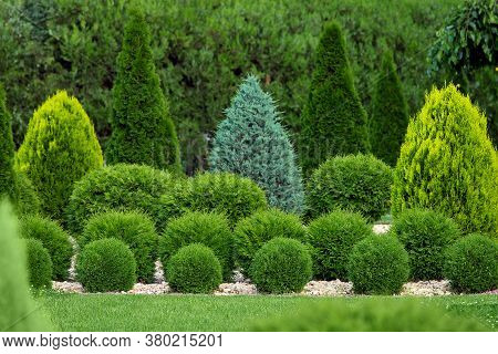 Greenery Landscaping Of A Backyard Garden With Evergreen Thuja And Cypress In A Greenery Park With D