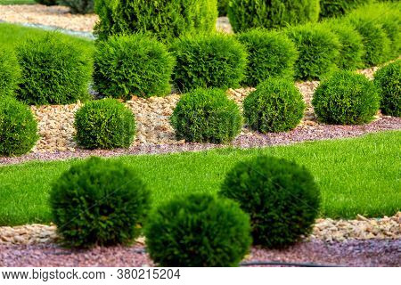 Landscape Design Of A Backyard Garden With Row Ornamental Growth Cypress Bushes By Yellow Stone Mulc