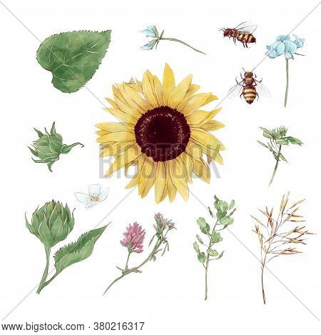 Set Of Elements Of Sunflowers And Wildflowers In Digital Watercolor Style