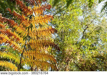 Background Of Beautiful Autumnal Fern Leaf Vegetation