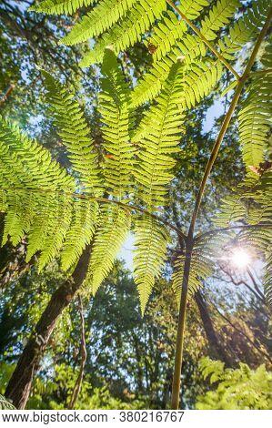 Sunset Through Lush Green Fern Leaf Vegetation