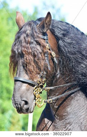 Beautiful Powerful Draft Horse