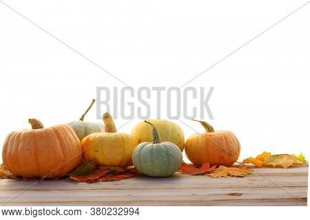 Pumpkins and maple leaves isolated on white background.