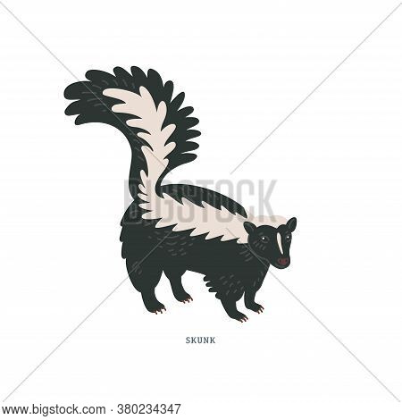 Striped Skunk. Common Skunk Or Mephitis Mephitis - North American Animal With White Markings Along T