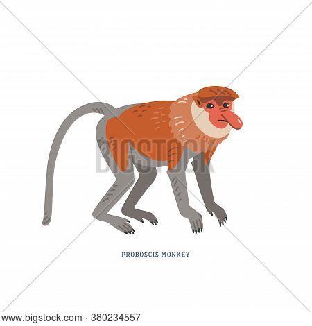 Proboscis Monkey. Nasalis Larvatus Or Long-nosed Monkey.