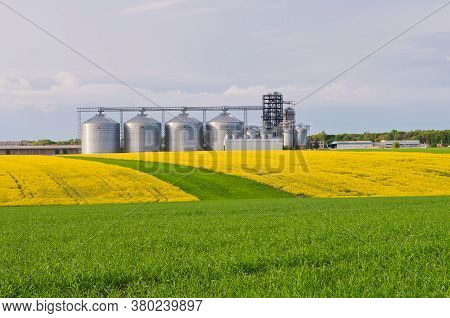 Several Granaries With A Field Of Blooming Canola And Wheat In The Foreground