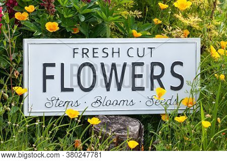 Beautiful Summer Flowers In A Garden Bed With A White Sign Saying Fresh Cut Flowers. Close Up Of An