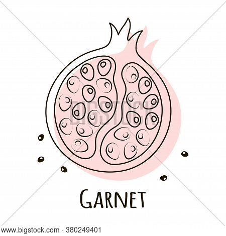 Pomegranate Fruit Vector Illustration Isolated On White, Creative Card, Scandinavian Style