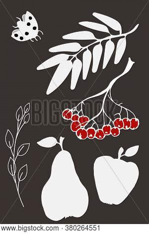 Autumn Hand Drawn Images. White Silhouttes On Dark Background. Isolated Leaves Of Ash, Rowan, Lady B
