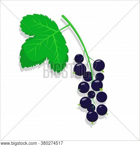 Black Currant With Leaves. Currant Icons On The White Background. Vector Illustration.