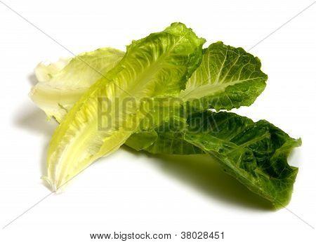 Fresh Leaves Of Salad