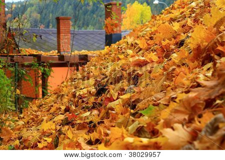 The leaves on the roof
