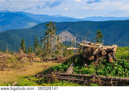 Pines Cut Down And Abandoned Along A Forest Road In The Carpathians, Western Ukraine.