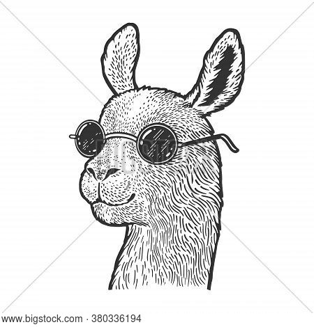 Llama In Sunglasses Sketch Engraving Vector Illustration. T-shirt Apparel Print Design. Scratch Boar