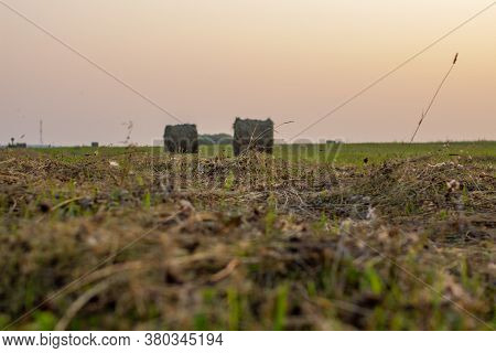 A Few Round Bales Of Yellow Hay In A Field At Sunset. Harvesting Hay For The Household