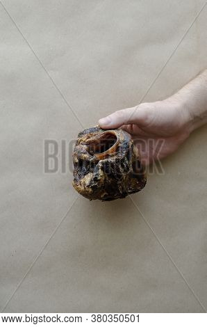 An Adult Caucasian Mans Hand Holds A Dried Beef Larynx. Natural Dried Dental Treats For Pets. Encour