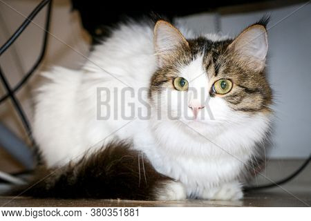 Cute White Cat Sitting On The Sofa