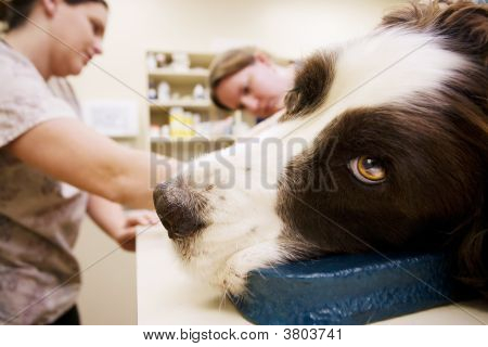 Veterinary Assistants And Dog