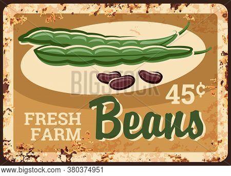 Beans Rusty Metal Plate, Kidney Green Vegetables Food, Vector Farm Market Price Vintage Poster. Natu