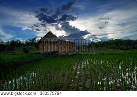 View Of Cottage  Farmer  In Thailand, Ecotourism For Learning Thai Agriculture.