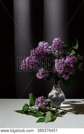 Still Life Of Bright Branch Of Lilac In The Glass Vase On White Table On Grey Curtains Background