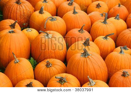 a collection of many pumpkins displayed on a field