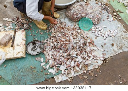 Freshly Catch Fish On A Market