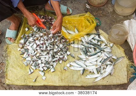 Freshly Catch Sardines, Anchovies