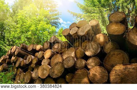 Forestry Industrial Shot In Nature: Pile Of Felled Tree Trunks In A Green Forest On A Beautiful Sunn