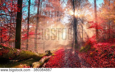 Enchanting Autumn Scenery In Dreamy Colors Showing A Forest Path With The Sun Behind A Tree Casting