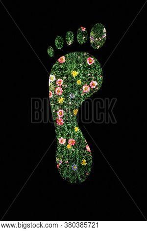 Carbon Footprint concept of green plant footprint